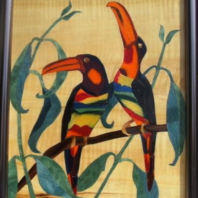 Exotics birds